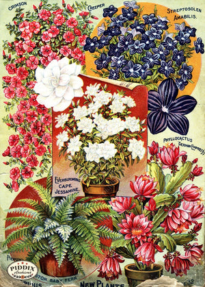 Pdxc1493 -- Flower Seed Catalogs Color Illustration