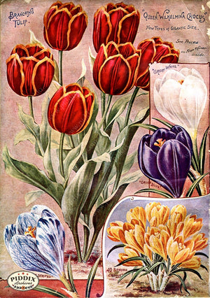 Pdxc1500 -- Flower Seed Catalogs Color Illustration