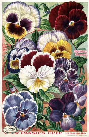 Pdxc1504 -- Flower Seed Catalogs Color Illustration