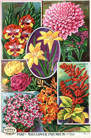 Pdxc1505 -- Flower Seed Catalogs Color Illustration