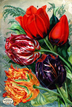 Pdxc1508 -- Flower Seed Catalogs Color Illustration