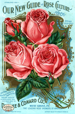 Pdxc1511 -- Vintage Rose Culture Catalogs Color Illustration