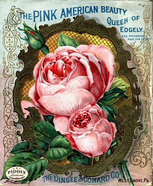 Pdxc1513 -- Vintage Rose Culture Catalogs Color Illustration