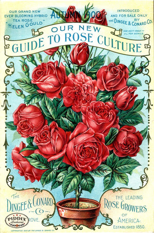 Pdxc1515 -- Vintage Rose Culture Catalogs Color Illustration