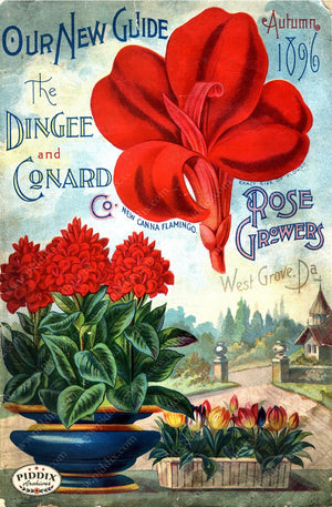 Pdxc1518 -- Vintage Rose Culture Catalogs Color Illustration