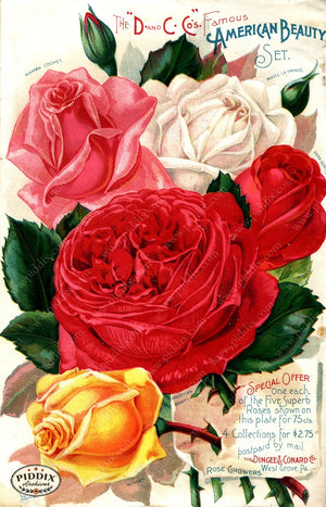 Pdxc1520 -- Vintage Rose Culture Catalogs Color Illustration