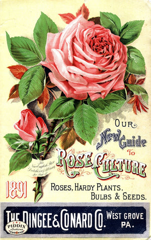 Pdxc1522 -- Vintage Rose Culture Catalogs Color Illustration