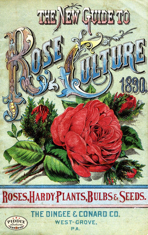 Pdxc1523 -- Vintage Rose Culture Catalogs Color Illustration