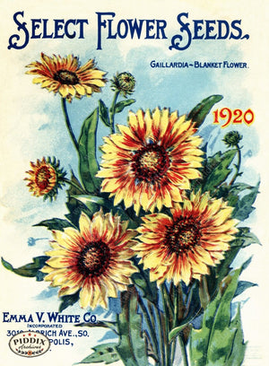 Pdxc1526 -- Seed Catalog Flowers Color Illustration