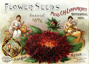 Pdxc1553 -- Flower Seed Catalogs Color Illustration