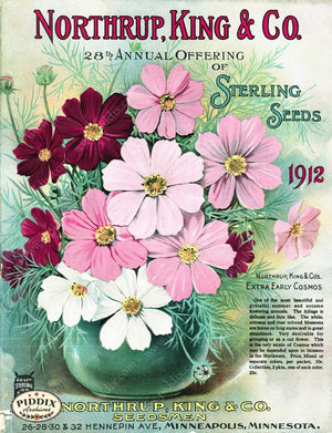 Pdxc1562 -- Flower Seed Catalogs Color Illustration
