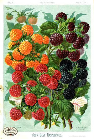 Pdxc1566 -- Fruit & Vegetable Seed Catalogs Color Illustration