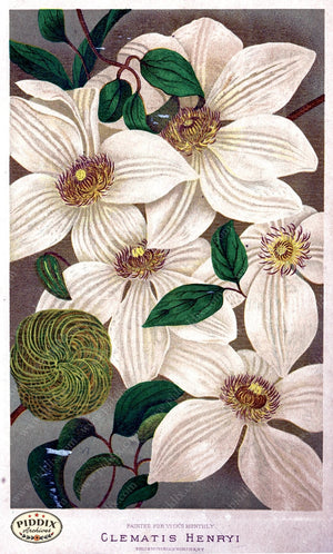 Pdxc1570 -- Flower Seed Catalogs Color Illustration