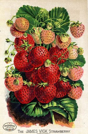 Pdxc1572 -- Fruit & Vegetable Seed Catalogs Color Illustration