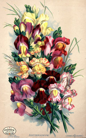 Pdxc1573 -- Flower Seed Catalogs Color Illustration