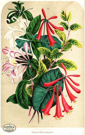 Pdxc1578 -- Flower Seed Catalogs Color Illustration