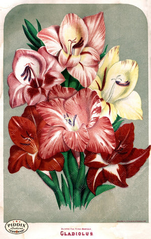 Pdxc1579 -- Flower Seed Catalogs Color Illustration