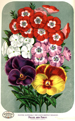 Pdxc1580 -- Flower Seed Catalogs Color Illustration