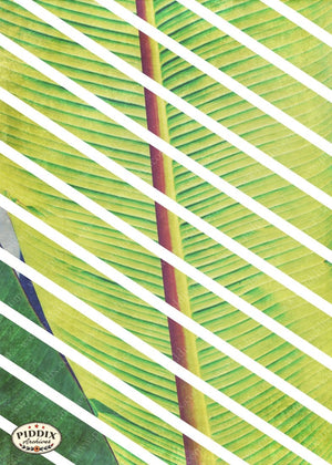 Pdxc16198 -- Tropical Breeze Original Art