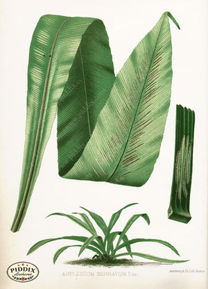Pdxc16442 -- Plants & Leaves Color Illustration