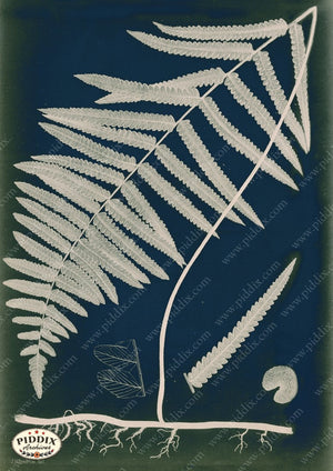 PDXC16445c Fern Cyanotypes -- Ferns Original Art