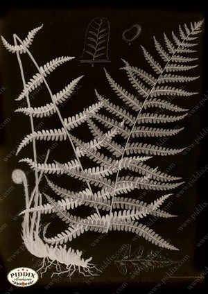 PDXC16449b X-rays -- Ferns Original Art
