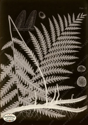 PDXC16451b X-rays -- Ferns Original Art