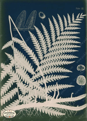PDXC16451c Fern Cyanotypes -- Ferns Original Art