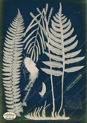 PDXC16452c Fern Cyanotypes -- Ferns Original Art