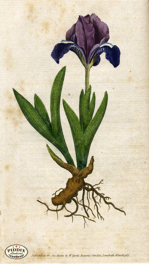 Pdxc1730 -- Flowers Color Illustration