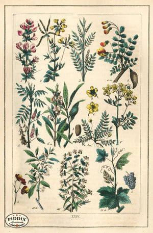 Pdxc18826 -- Flowers Color Illustration