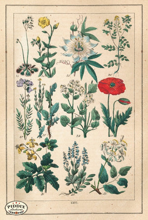 Pdxc18830 -- Flowers Color Illustration