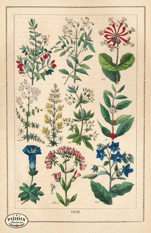 Pdxc18832 -- Flowers Color Illustration