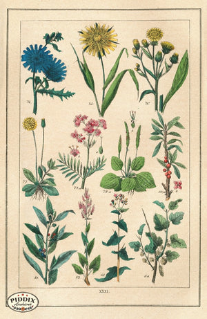 Pdxc18838 -- Flowers Color Illustration