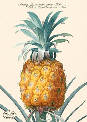 PDXC19300b -- Pineapples Color Illustration