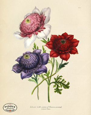 PDXC19312a -- Flowers Color Illustration