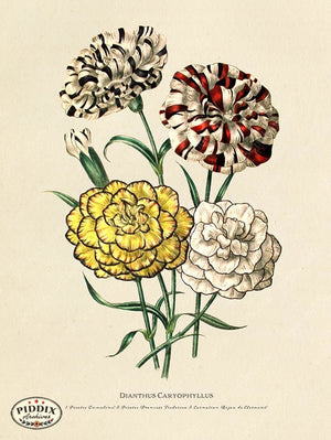 PDXC19323a -- Flowers Color Illustration