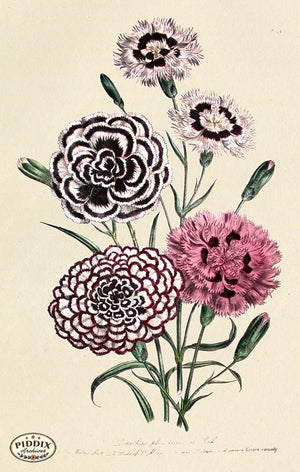PDXC19324a -- Flowers Color Illustration