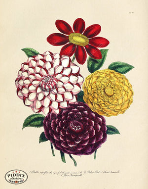 PDXC19327a -- Flowers Color Illustration