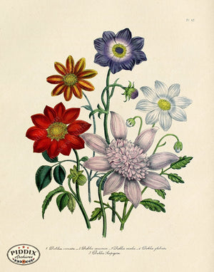 PDXC19328a -- Flowers Color Illustration