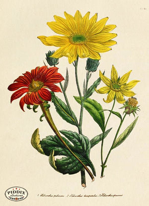 PDXC19329a -- Flowers Color Illustration
