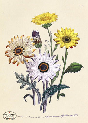 PDXC19330a -- Flowers Color Illustration