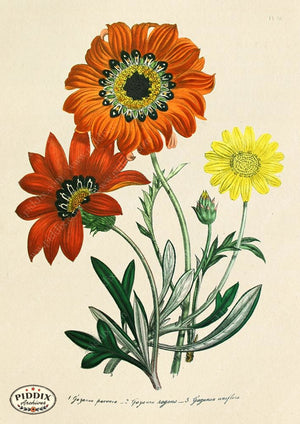 PDXC19331a -- Flowers Color Illustration