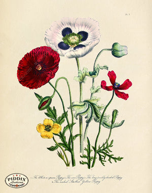 PDXC19333k -- Flowers Color Illustration