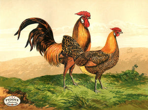 PDXC19400 -- Chickens & Poultry Color Illustration
