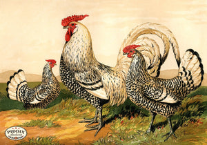 PDXC19401 -- Chickens & Poultry Color Illustration