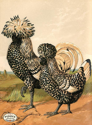 PDXC19405 -- Chickens & Poultry Color Illustration