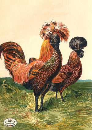 PDXC19406 -- Chickens & Poultry Color Illustration