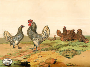 PDXC19415 -- Chickens & Poultry Color Illustration