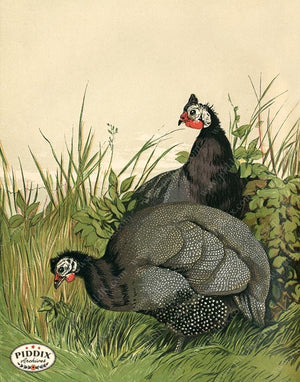 PDXC19421 -- Chickens & Poultry Color Illustration